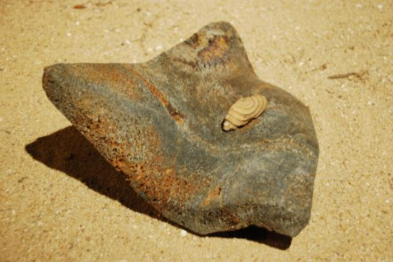 La main de Siddartha à Bodgaya-pierre de la Butte et bois