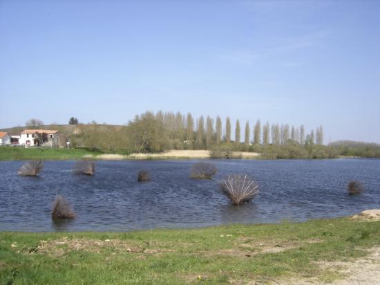 Corolles- Marais de Goulaine 2010